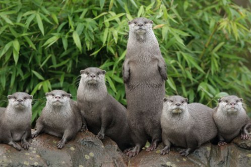 MDT of otters
