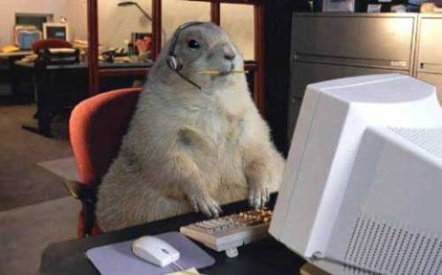 Otter co-worker